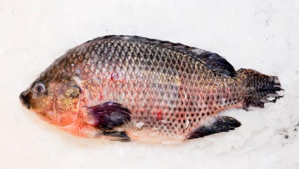 How to Season Tilapia http://www.bbc.co.uk/food/tilapia