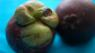 Mangosteen