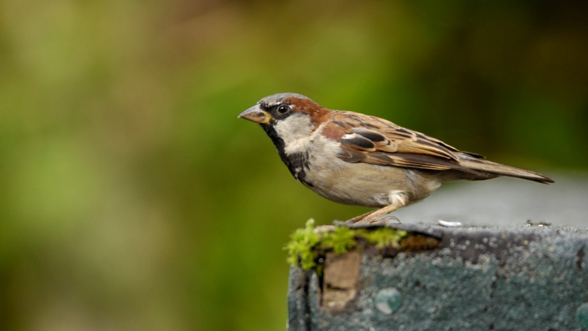 The Sparrows - Short Story of Family Bonding Pictures of house sparrows