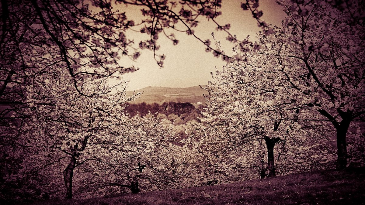 An analysis of the cherry orchard