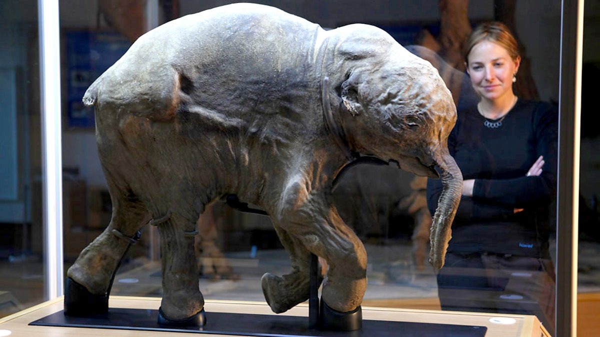 Woolly Mammoth: Secrets From The Ice - Episode 27-09-2020