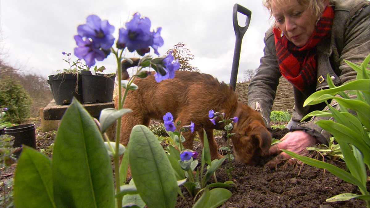 Bbc Two Life In A Cottage Garden With Carol Klein