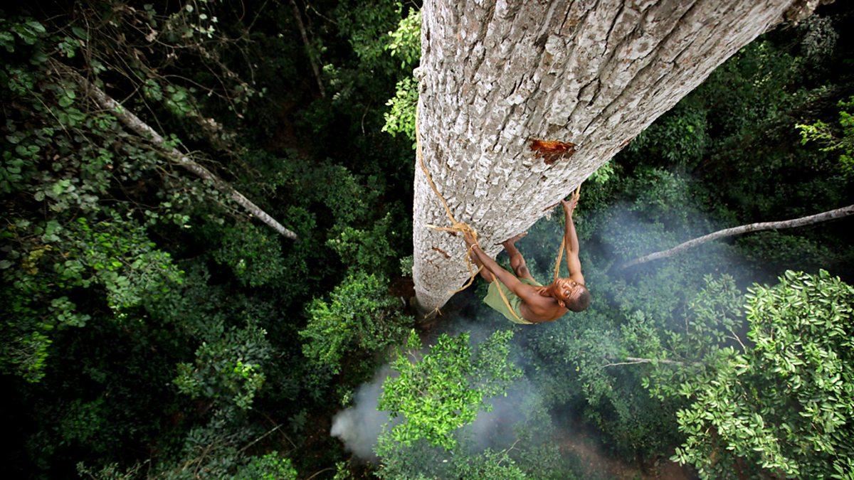 Bbc one human planet - Plante jungle ...