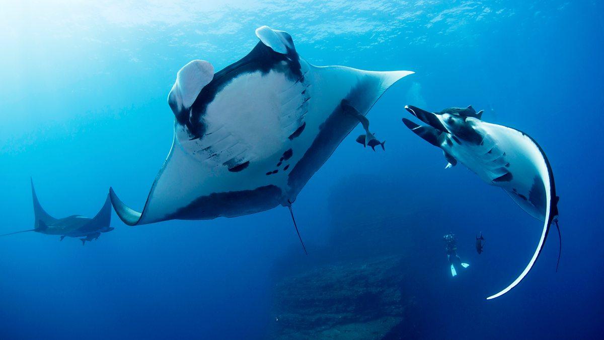 Shark - 3. Beneath The Surface