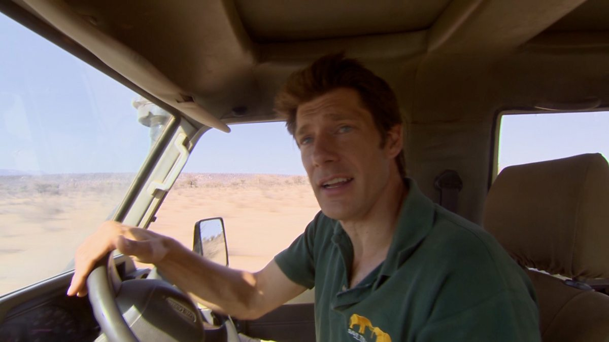 bbc two this wild life elephant in the bedroom frank 39 s new job