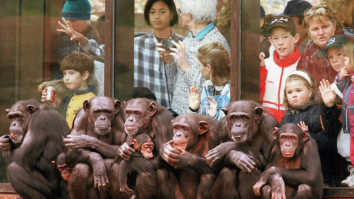 essay on animals in captivity Wild animals are kept in captivity for a variety of reasons and in a range of environments, including zoos and circuses, scientific laboratories and also as pets at home.