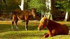 The New Forest heathland creatures