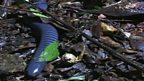 Legless amphibians