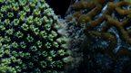 Coral turf wars