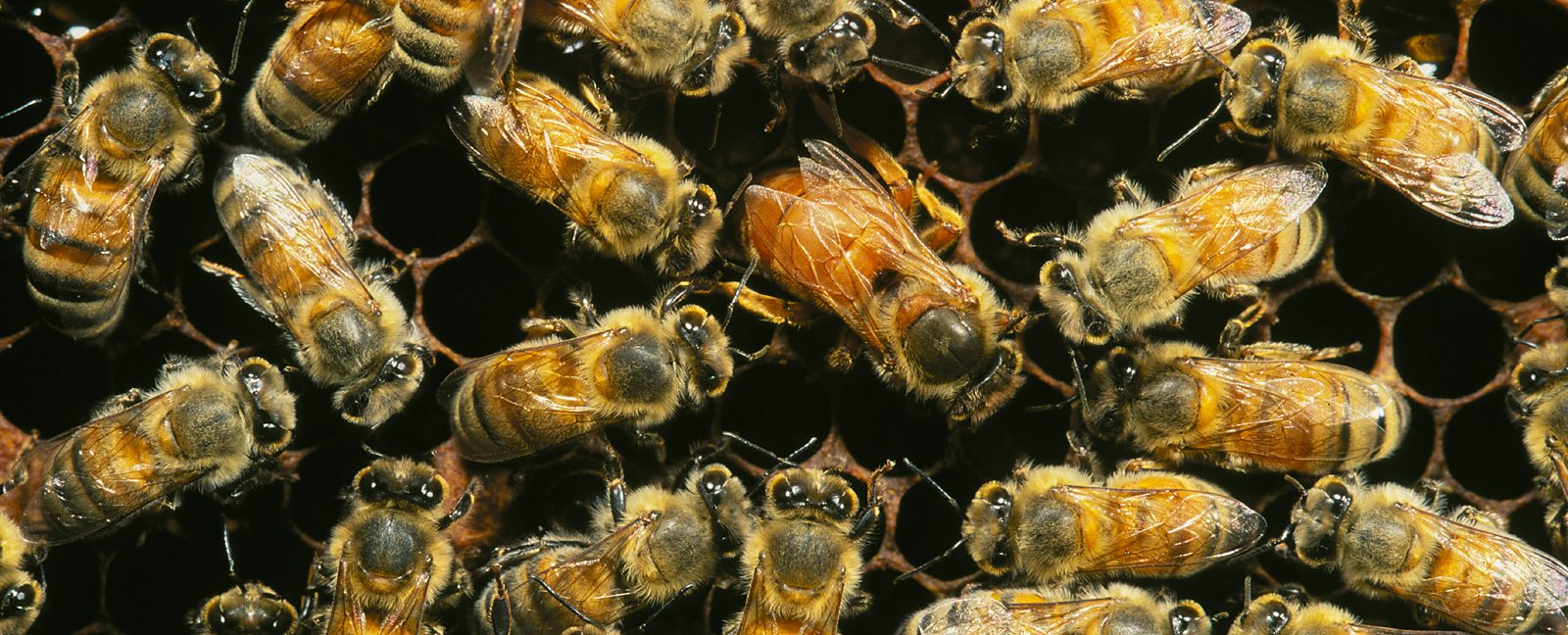 we can t survive without bees