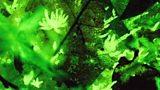 Bioluminescence: lighting up the natural world