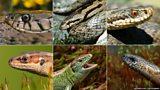 Identify wildlife