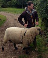 Matt and the Shropshire sheep