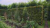 Why should I plant a hedge?