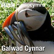 Galwad Cynnar