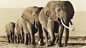 Natural World - 2010-2011 - Echo - An Unforgettable Elephant