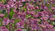 Gardeners' World - 2014 - Episode 16