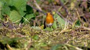 Gardeners' World - 2014 - Episode 25