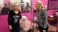 Paws for thought on the Welsh Dog Spa