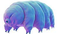 El secreto del animal más resistente del planeta