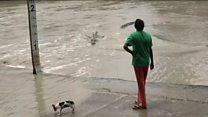 Woman, dog, crocodile...