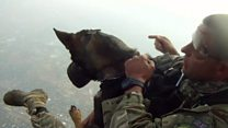 Africa's skydiving anti-poaching dogs