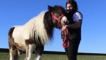 Swear word sprayed on horse by vandals