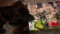 Sniffer dogs uncover illegal cigarettes