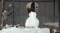 """La """"pelea"""" juguetona de un panda con un muñeco de nieve"""