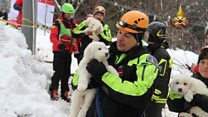Puppies rescued from avalanche hotel
