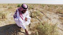 Dust-catching plants in Kuwaiti desert