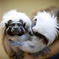 Why do some animals stay monogamous?