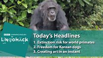 Lingohack: 3 May 2017: Extinction risk for world primates: Image with headlines