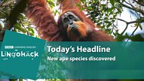 Lingohack: 8 November 2017: Ape: Image with headlines