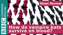 News Review: Vampire bats' blood-only diet: Image