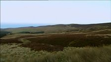 Image for Regenerating moorland