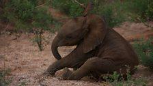 Elephant roll