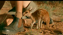 Image for The Kangaroo Song