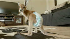 Image for Cute baby kangaroos in nappies