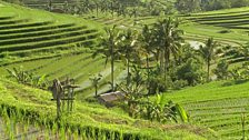 Image for Is tourism killing the real Bali?