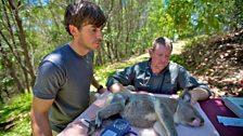Wildlife vet Jon Hanger