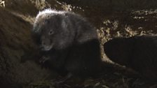 The Vole Gallery