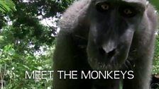 Image for Introduction to the Monkeys