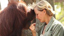 Lone and a rescued orangutan