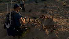 Image for The Kalahari Meerkat Project Volunteers