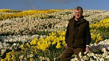 Image for Daffodil grower