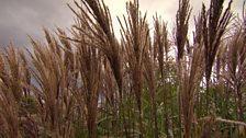 Image for Great grasses
