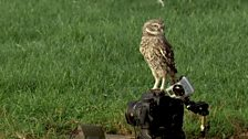 Image for Tweeting Owls