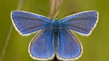 Image for 2013's good weather 'fantastic news' for butterflies