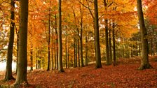 In pictures: Autumn